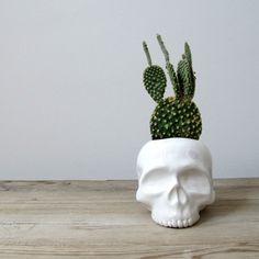 Skull Planter from mudpuppy