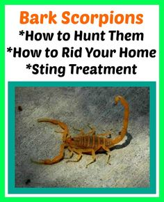 scorpion species found in tennessee nature info desert scorpion rh pinterest com