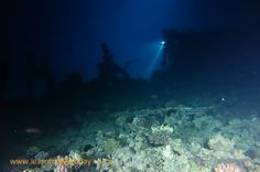 Divers exploring the barge wreck at Bluff Point in Egypt's Red Sea at night Red Sea Diving, Exploring, Egypt, Northern Lights, Island, Night, Travel, Block Island, Viajes
