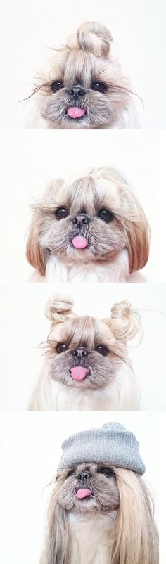 When Your Dog Asks For A New Hairstyle #haha #funny
