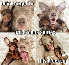 Image result for enjoy friday and weekend cutest images