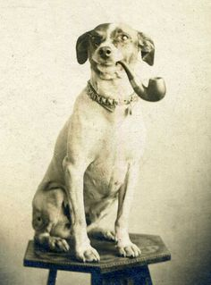 Dog smoking a Pipe - Cabinet Portrait taken in the late 1800s