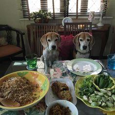 guten apetite