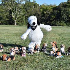 Beagle pawty.. lol