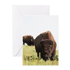 Bison Bull on Prairie Greeting Cards