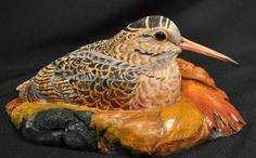 Woodcock, American - Birds in Wood