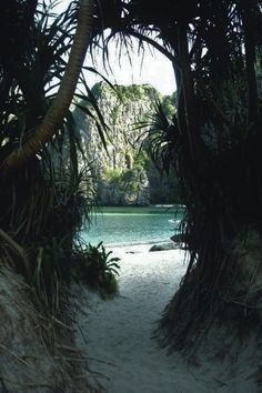 jungle scenery with white sand by the crystal blue ocean sea beach on a tropical island paradise like hawaii The Places Youll Go, Places To See, Places To Travel, Travel Destinations, Hidden Places, Dream Vacations, Beach Vacations, Beautiful Beaches, Beautiful Things