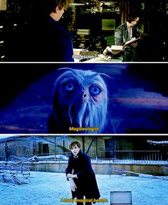 Newt Scamander - I'm writing a book about magical creatures.