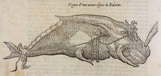 Œuvres / Ambroise Paré ... - Paris : Gabriel Buon, 1585 (Poitiers, Bibliothèque universitaire, Fonds ancien, Méd. 22)