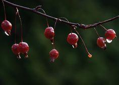 Feed the Birds: 6 Plants for Abundant Winter Berries
