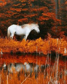 Your bucket-list is not complete without these 19 romantic and surreal fall travel destinations. It's time to get your sweetie and pack your bags. Fall Pictures, Horse Pictures, Animal Pictures, Pretty Pictures, Pretty Horses, Beautiful Horses, Animals Beautiful, Horse Photography, Nature Photography
