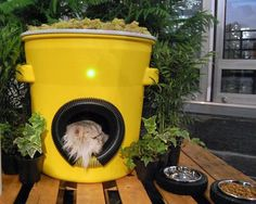 Tabby Architects Compete to Design Cat Houses for New York's Stray and Feral Tabbies : TreeHugger - Made out of recycled materials, the winning house includes a green roof, solar power, and a transmitter that records information about the cat. Feral Cat Shelter, Feral Cat House, Outdoor Cat Shelter, Cat House Diy, Outdoor Cats, Feral Cats, Tnr Cats, Tabby Cats, Shelter Design