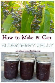 How to make and can elderberry jelly- another great way to eat all natural Vitamin C to stay healthy during cold and flu season! All Natural Vitamins, Natural Vitamin C, Jelly Recipes, Jam Recipes, Elderberry Recipes, Elderberry Jelly Recipe Sure Jell, Herbal Jelly Recipe, Elderberry Syrup Recipe Canning, Elderberry Syrup Uses