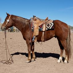 Ranch and Rope Horse for Sale - For more information click on the image or see ad # 44439 on www.RanchWorldAds.com