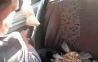 JORNAL O RESUMO - BOLETINS POLICIAIS - COM FOTOS JORNAL O RESUMO: Polícia acabou com quartel do tráfico - Estuprador...
