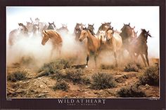 Simply superb! This wild Horses running in a group is the perfect accent to add a touch of class into your home. It will be a perfect addition for your living room or bedroom and any place wherever you want to use this poster. This poster is made of using Eco-solvent inks on high quality paper which ensures long lasting beauty of the product. Order today and enjoy your surroundings.