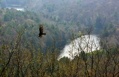 cook forest state park - Google Search