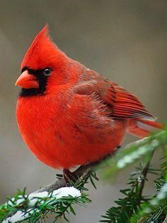 Pet Birds Cockatiel, Roller Pigeons For Sale, - Birdsnest, Humming Bird Art. Pretty Birds, Beautiful Birds, Animals Beautiful, Cute Animals, Funny Animals, Beautiful Things, Bird Pictures, Animal Pictures, Birds In The Sky