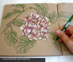 Everyone is unique, and it's worth to show it - How to draw hydrangea flowers, part II
