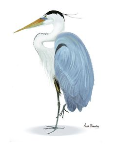 Blue Heron Painting - Blue Heron With No Background by Anne Beverley-Stamps Quirky Home Decor, Elegant Home Decor, Fall Home Decor, Cheap Home Decor, Outdoor Entryway Decor, Audubon Prints, Vintage Bird Illustration, Loft Interior Design, Lake Art
