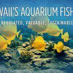VIDEO: Hawaii's Aquarium Fishery: Regulated, Valuable, Sustainable