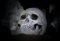 Scary Spooky Halloween Skull Skeleton Bat Photo 13x19 by JWPhoto, $28.00