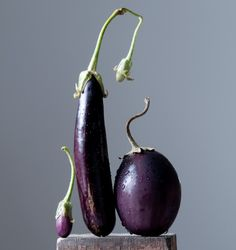 Eggplant Family by Lynn Karlin - photograph, limited edition archival pigment print. For more information see MaineFarmlandTrustGallery.com