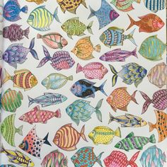 Lost Ocean Colorful Fishes