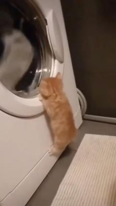 Funny Cute Cats, Cute Baby Cats, Cute Cats And Kittens, Cute Little Animals, Cute Funny Animals, Kittens Cutest, Cute Babies, Cute Animal Videos, Funny Animal Pictures