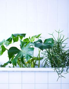A few larger plants sit in a white bathtub. Plants Are Friends, Large Plants, Green Garden, Houseplants, Indoor Plants, Greenery, Floral, Flowers, Nature