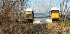 Winter der noch keiner ist Wall Oven, Kitchen Appliances, Winter, Honey Bees, Bees, Diy Kitchen Appliances, Winter Time, Home Appliances, Appliances