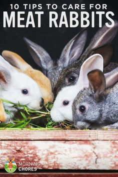 10 Tips to Care for Your Backyard Meat Rabbits -- We love our rabbits. They give a ton of meat to our family, but don't require a lot of space. However, if you are going to raise rabbits for meat it is important to understand how to care for them. With that being said, here are my tips on providing great care to your meat buns