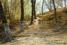 Secret forests of Tuscany Photo by mauro paolo cascasi | Your Walls, Your Style! | artGalore.ca