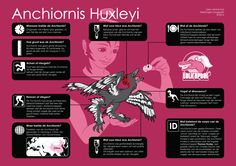 Infographic about a bird-like dinosaur called Anchiornis Huxleyi