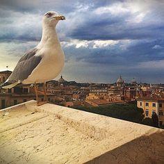 When in Rome, Piazza Venezia
