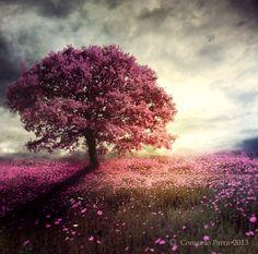 Spiritual  tree by Aeternum-Art.deviantart.com on @DeviantArt
