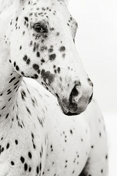 horse with beautiful spots or as I call my freckles; angel kisses