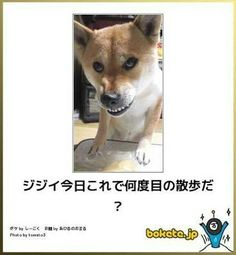 Japanese Dogs, Illustrations And Posters, Shiba, Animals And Pets, Corgi, Pet Dogs, Pets, Illustrations Posters, Corgis