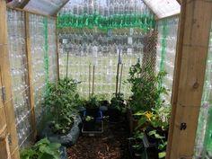 """Une serre en bouteilles plastiques pour promouvoir """"Green Lifestyle"""" dans un école en Angleterre - Photo : Stanningtonfirstschool.co.uk"""