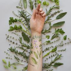 Bouquet Garni Set by Vincent Jeannerot from Tattly Temporary Tattoos. Fake tattoos by real artists! Herb Tattoo, Botanisches Tattoo, Plant Tattoo, Tattoo Set, Fun Tattoo, Forearm Tattoos, Body Art Tattoos, Sleeve Tattoos, Tattly Tattoos