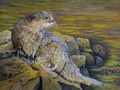"""Just after a swim a river otter relaxing on the rocks. Titled: """"On The River Bank - River Otter"""" and is available for purchase on fine art paper and canvas prints by Johanna Lerwick Wildlife / Nature Artist . Nature Paintings, Animal Paintings, River Otter, Nature Artists, Thing 1, River Bank, Wildlife Nature, Canvas Prints, Art Prints"""