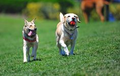 Keeping your dog safe at the dog park.    http://www.4knines.com/blog/keeping-your-dog-safe-at-the-dog-park-/