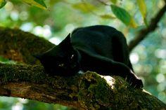 Black cat Mirtilla