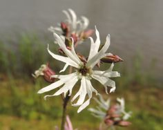 witte bloem 1