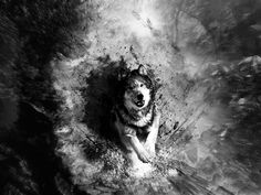 Abstract Art Black And White Wolf Hd Pictures 4 High Definition Wallpapers HD