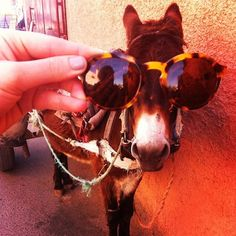 Even #donkeys look good in our #sunglasses.