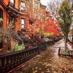 NY Through the Lens - New York City Photography - Brooklyn. Autumn. 🍂 (at New York, New York)