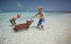 Caribbean Island Adventure & Sightseeing Tours in Bahamas / Exumas - Island Routes Bahamas Vacation, Vacation Trips, Vacation Wishes, Family Vacations, Family Travel, Nassau, Pig Island Bahamas, Pig Beach, Swimming Pigs