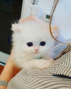 Kittens Cutest Baby, Cute Baby Dogs, Cute Cats And Kittens, Baby Cats, Cute Puppies, Baby Animals Pictures, Cute Animal Photos, Cute Animal Videos, Cute Little Animals