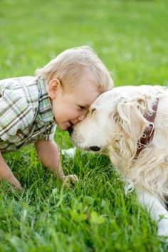 Canine Lymphoma Holistic Treatment